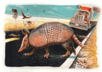 Armadillo by Jeff Crosby