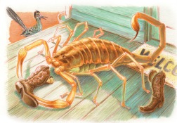 Texquisite Corpse: Scorpion